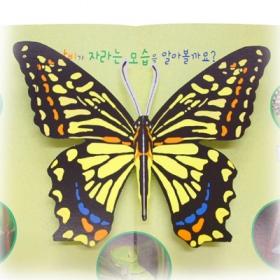 나비의 한살이